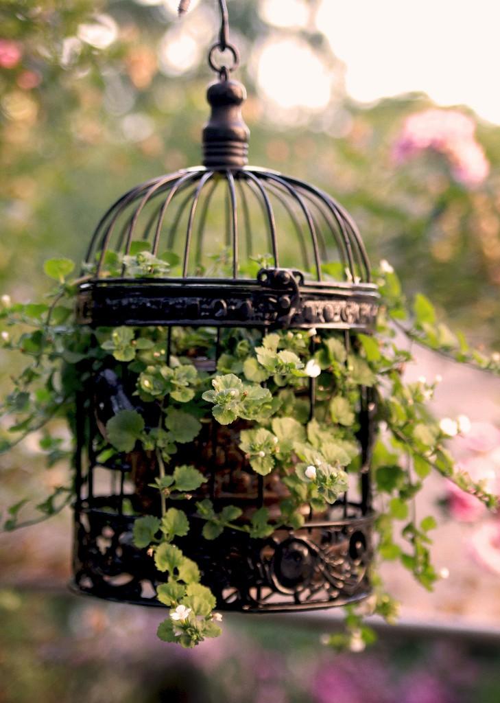 planta-dentro-de-gaiola-de-passarinho