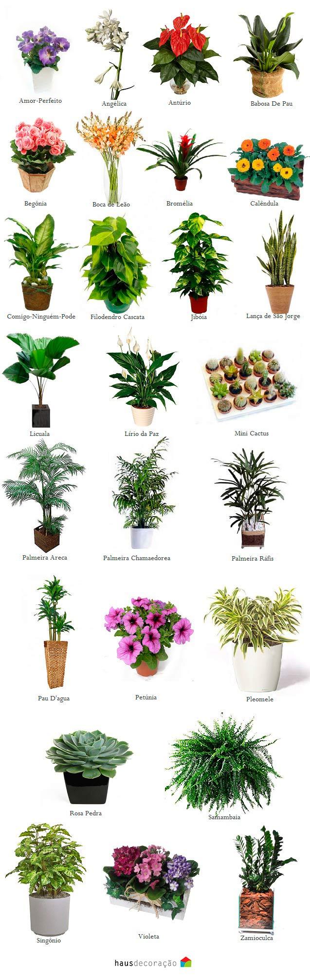 flores para jardim de inverno:PLantas ideais para jardim de inverno: