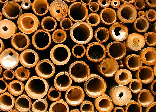 bambu-parede