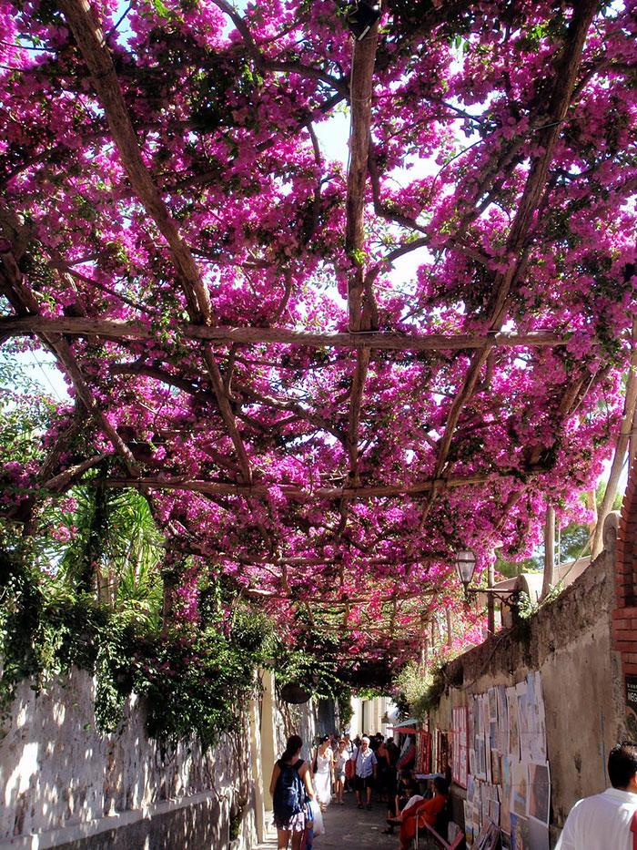 flores-rosas-rua-positano-italia