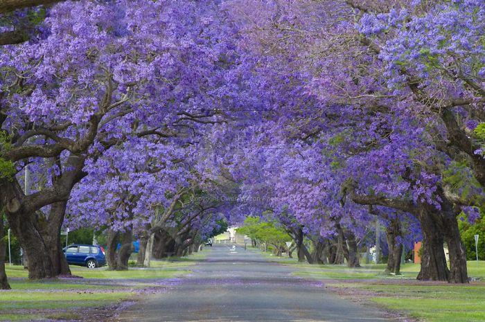 rua-florida-grafton-australia